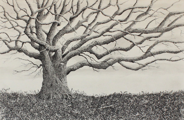 the oak on the barrow by stephanie Jane Rampton