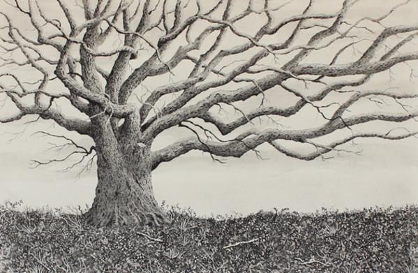 the oak on the barrow by stephanie Jane Rampton