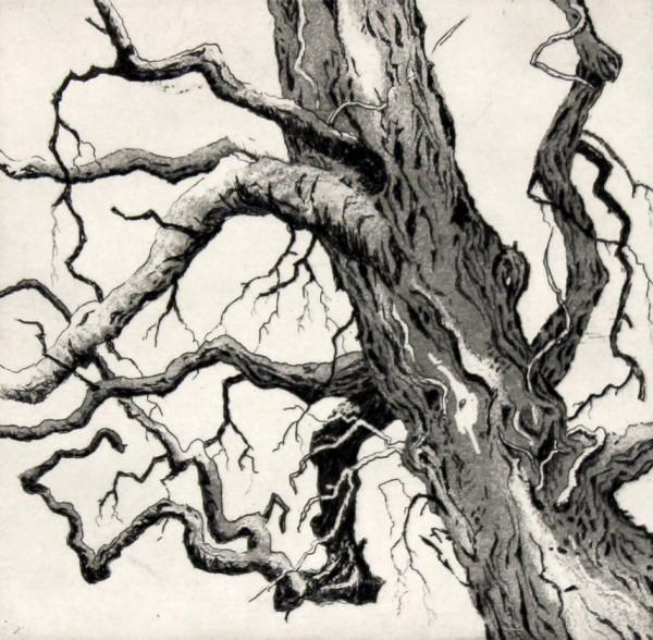 the waiting tree  by stephanie Jane Rampton