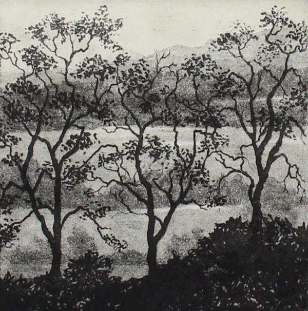 three trees and landscape by stephanie Jane Rampton