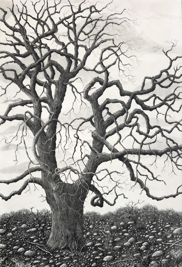 Tree of grace by stephanie Jane Rampton