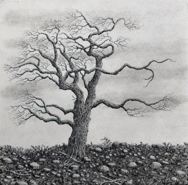 Tree series III by stephanie Jane Rampton