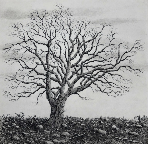 tree series II by stephanie Jane Rampton