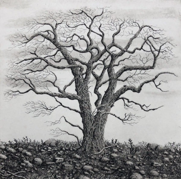 tree series I by stephanie Jane Rampton