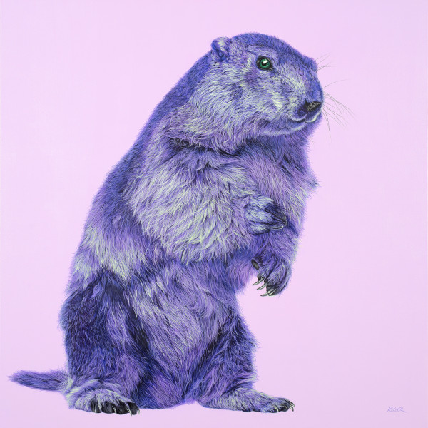 PURPLE MARMOT ON PINK, 2017 by HELMUT KOLLER