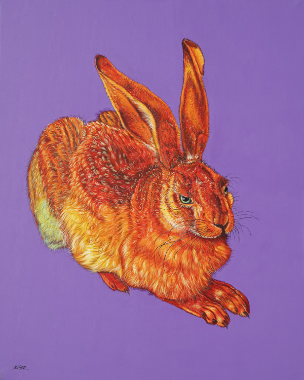 DÜRER HARE IN ORANGE, 2018 by HELMUT KOLLER