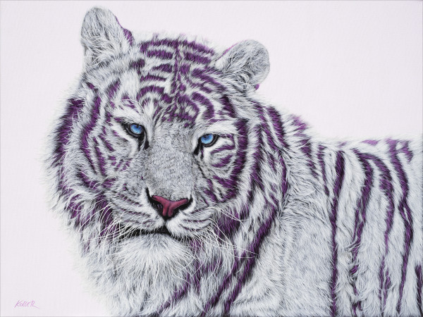 TIGER WITH MAGENTA STRIPES, 2019 by HELMUT KOLLER