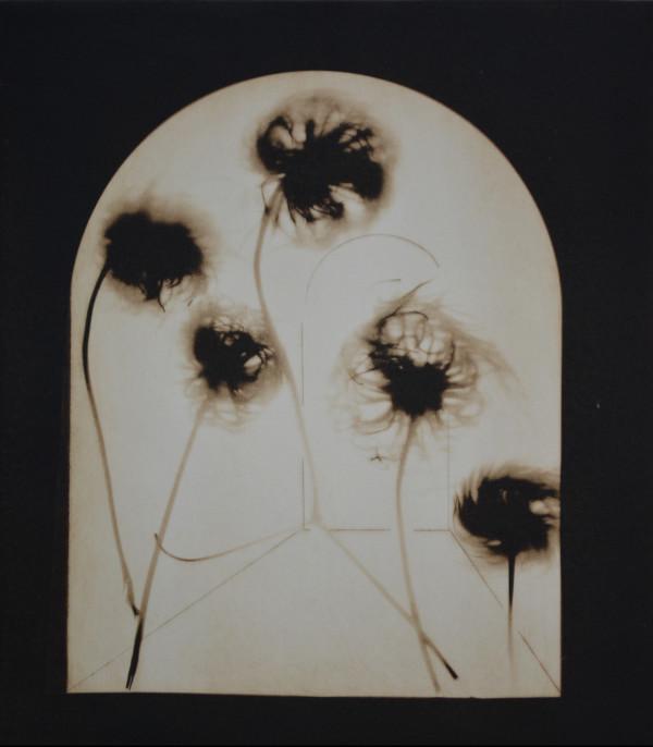 Five Clematis