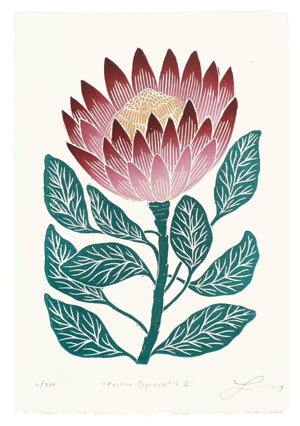 Protea Cynaroides II