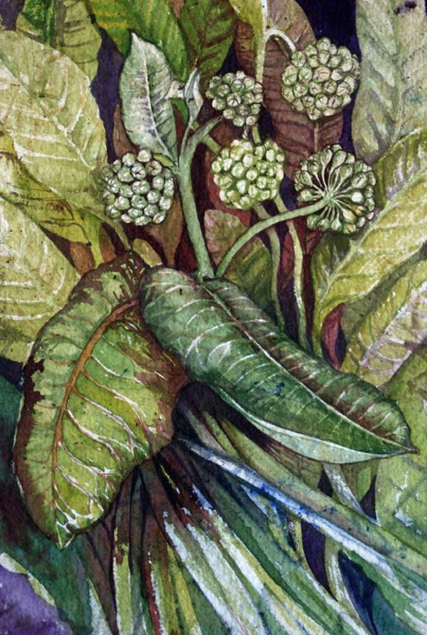 Milkweed Study II, 13 of 33 by Helen R Klebesadel