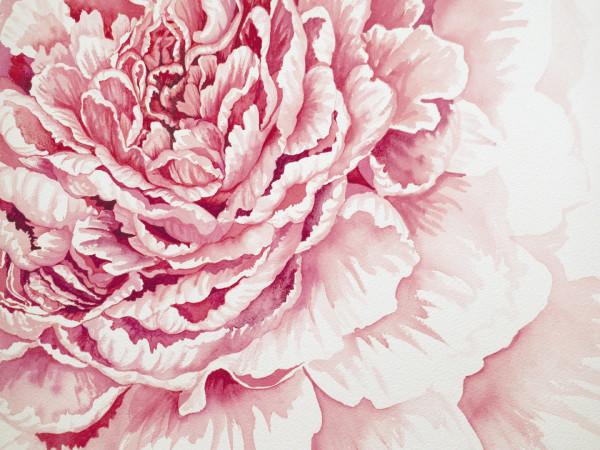 Pink Peony by Helen R Klebesadel