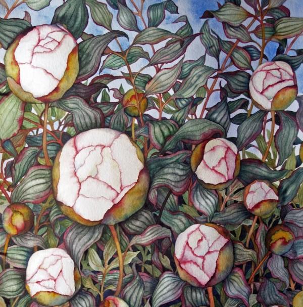Peony Buds by Helen R Klebesadel