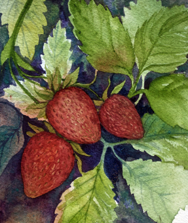3 of 33, Three Strawberries by Helen R Klebesadel