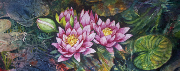 Water Lilies, 33 of 33 by Helen R Klebesadel