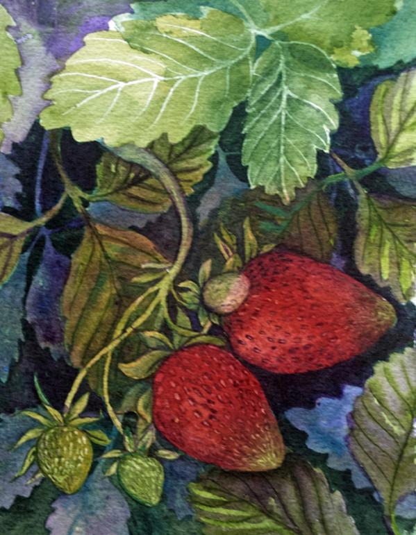Two Strawberries, 4 of 33 by Helen R Klebesadel