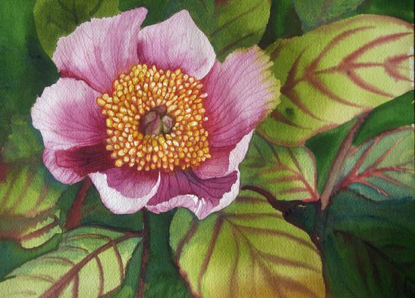 Last Pink Peony by Helen R Klebesadel