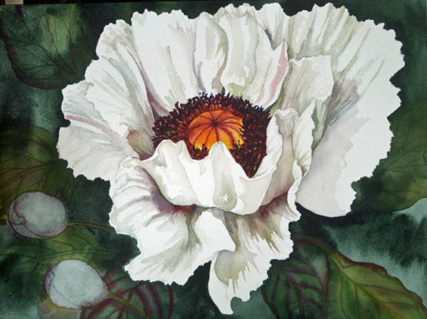 The Last White Peony by Helen R Klebesadel