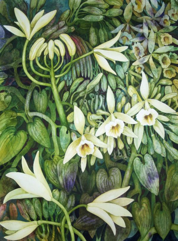 Vanilla Orchid II by Helen R Klebesadel