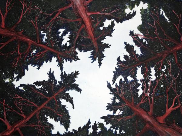 Cedar Grove Study by Helen R Klebesadel