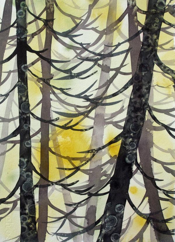 Yellow Cedar Study by Helen R Klebesadel