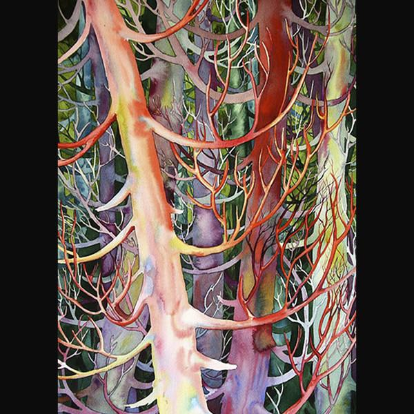 Cedar Dance II by Helen R Klebesadel