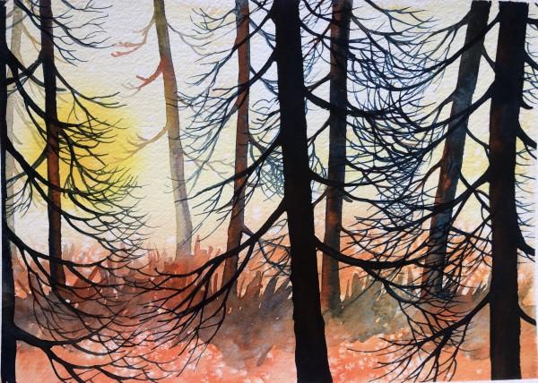 Cedar Sunset III by Helen R Klebesadel