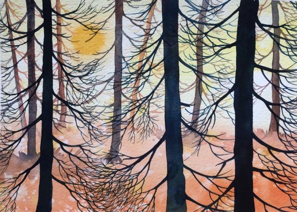 Cedar Sunset II by Helen R Klebesadel