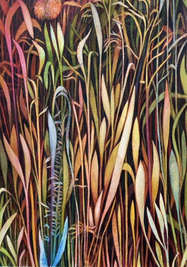 Fall Grasses by Helen R Klebesadel