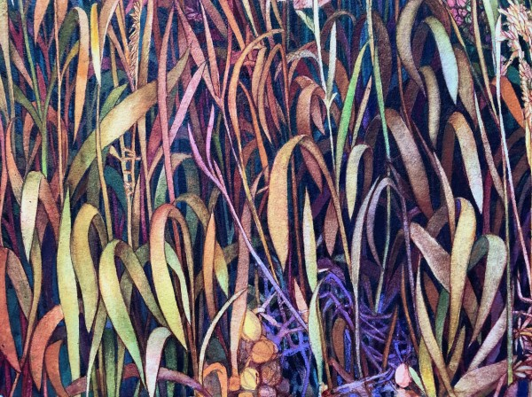 Fall Grasses V an original watercolor on paper by Helen R Klebesadel