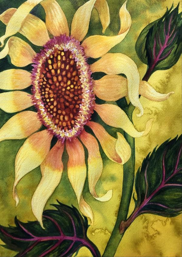 Garden Sunflower by Helen R Klebesadel