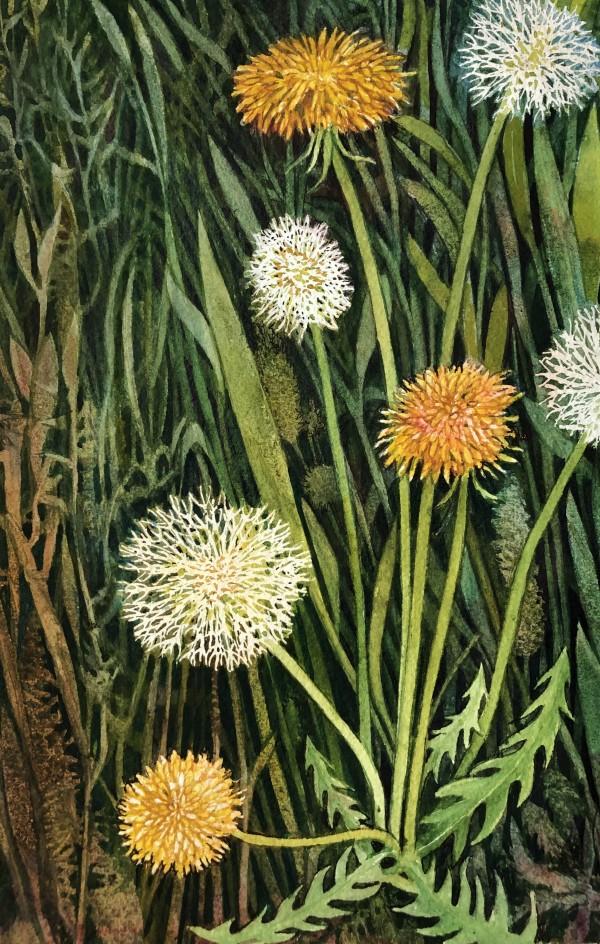 Dandelion I by Helen R Klebesadel