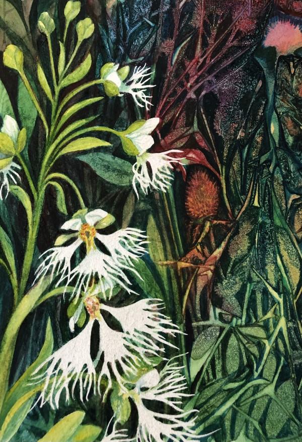 Fringed Prairie Orchid Study II by Helen R Klebesadel