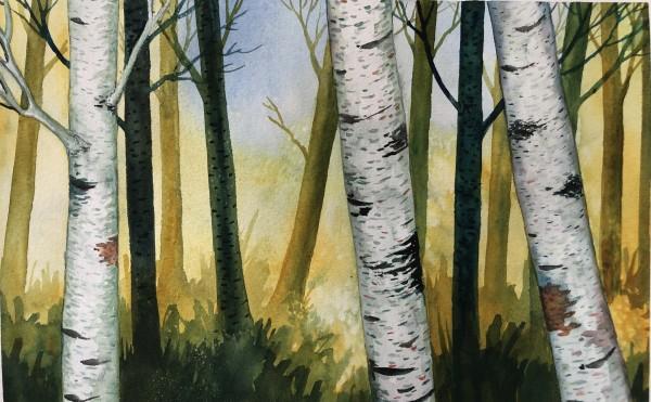 Birch Woods VI by Helen R Klebesadel
