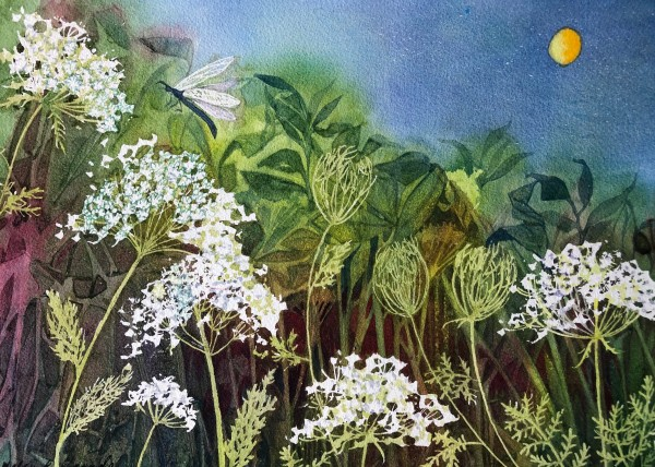 Queen Anne's Lace at Night Study by Helen R Klebesadel