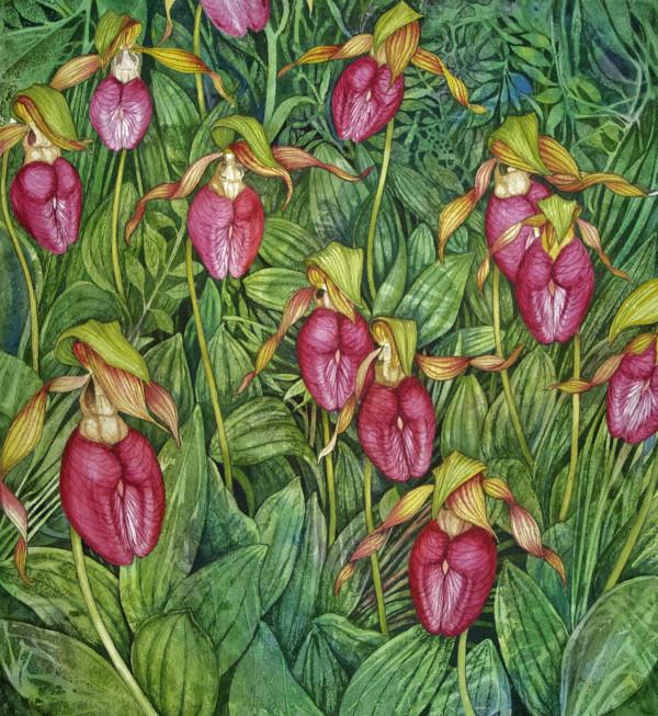 Moccasin Flower Feild by Helen R Klebesadel