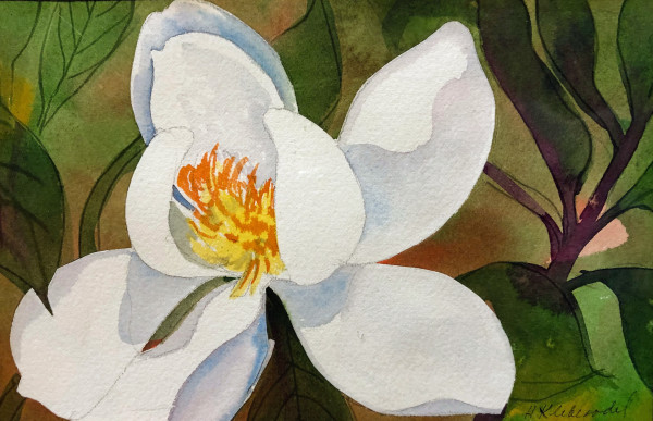 Magnolia Study by Helen R Klebesadel