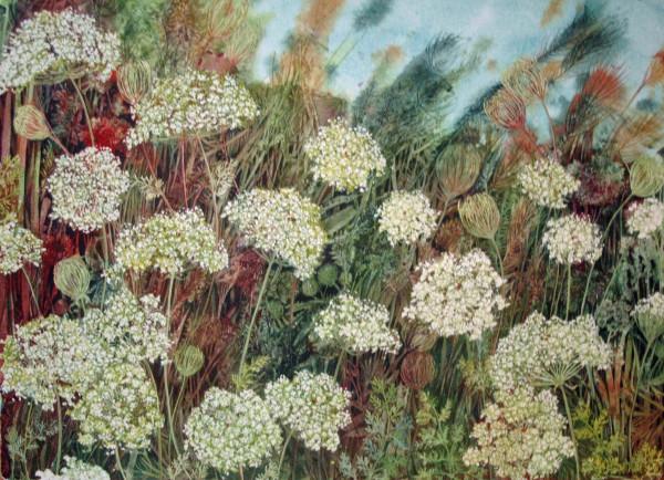 Queen Ann's Lace by Helen R Klebesadel