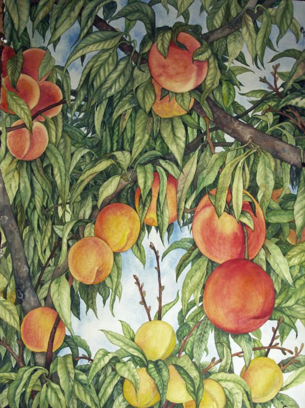 Peaches by Helen R Klebesadel