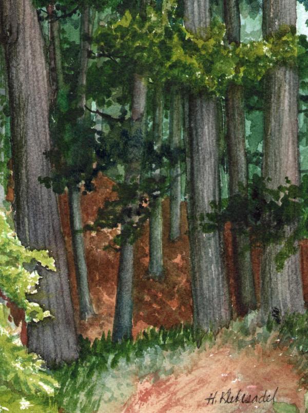 Pine Walk Study II an original watercolor by Helen R Klebesadel