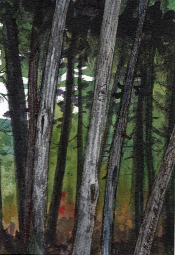 Pine Walk I an original watercolor by Helen R Klebesadel