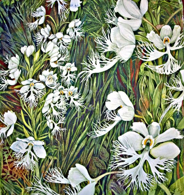 Fringed Prairie Orchid Feild by Helen R Klebesadel