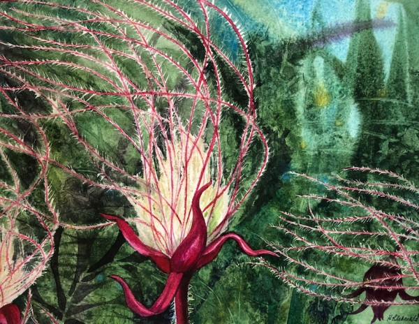 Prairie Smoke I an original watercolor by Helen R Klebesadel