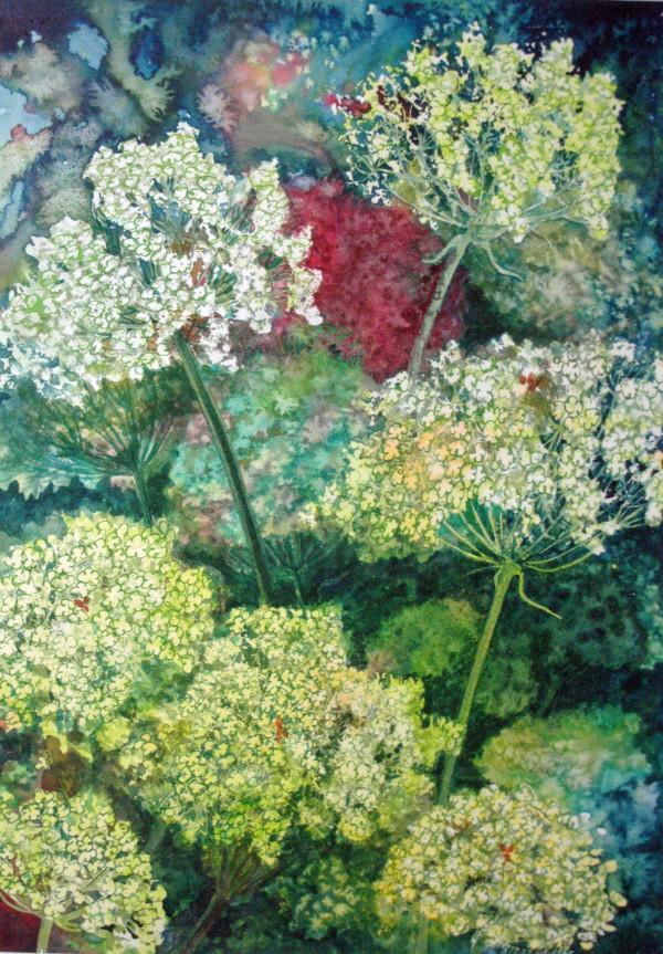 Queen Ann's Lace Study II by Helen R Klebesadel