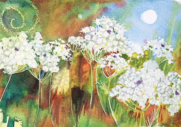 Queen Anne's Lace Study IV by Helen R Klebesadel