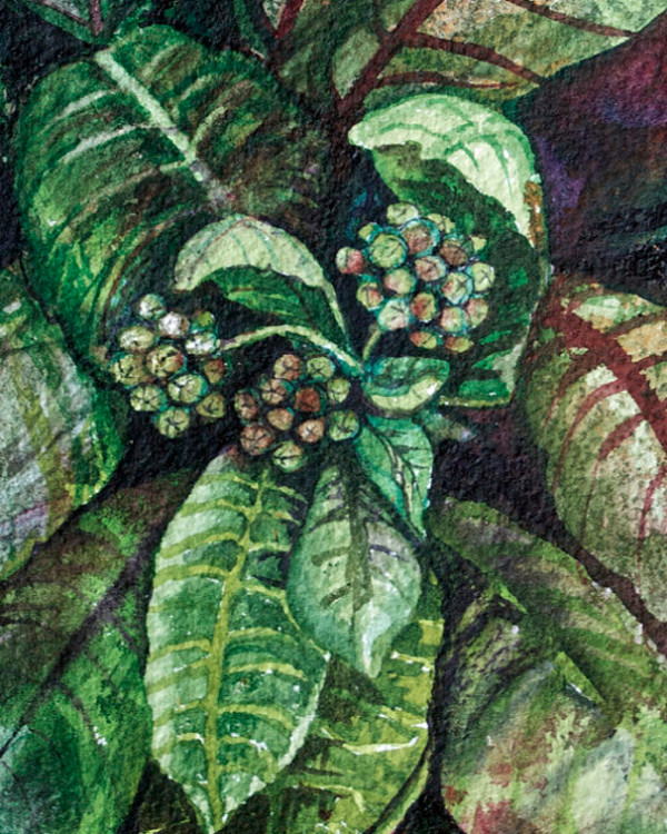 Milkweed by Helen R Klebesadel