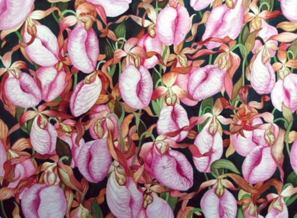 Moccasin Flower Field by Helen R Klebesadel