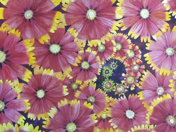 Blanket Flower Spiral by Helen R Klebesadel