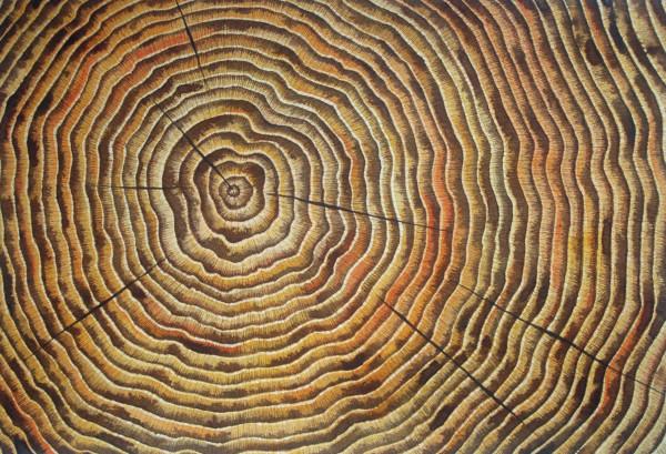 Timeline IV by Helen R Klebesadel