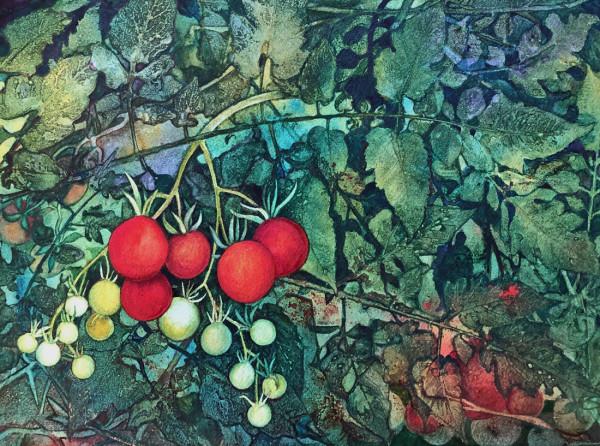 July Tomatos an original watercolor by Helen R Klebesadel