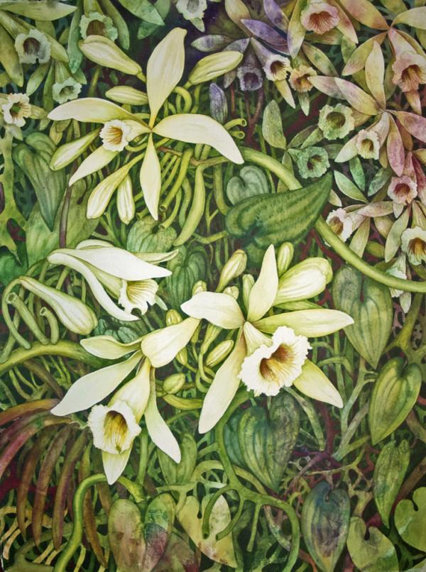 Vanilla Orchid I by Helen R Klebesadel